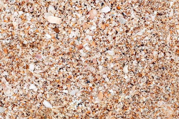 貝殻とビーチ 無料写真