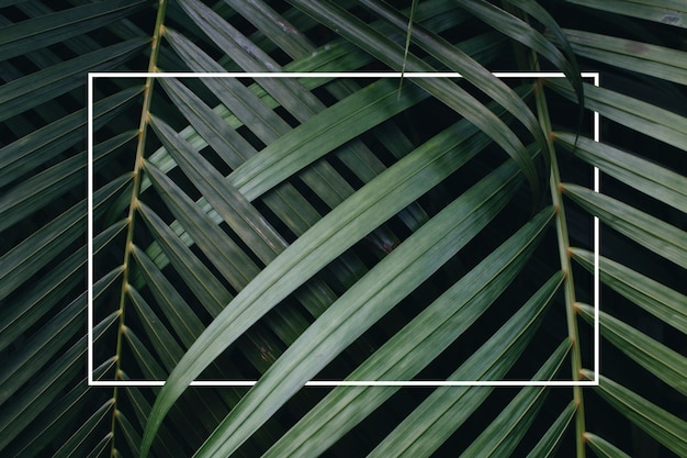 熱帯の緑の葉の背景 無料写真