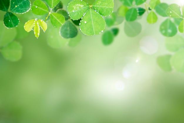 Круглые листья Бесплатные Фотографии