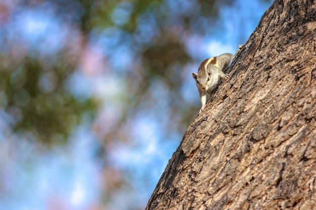 木の上のリス Premium写真