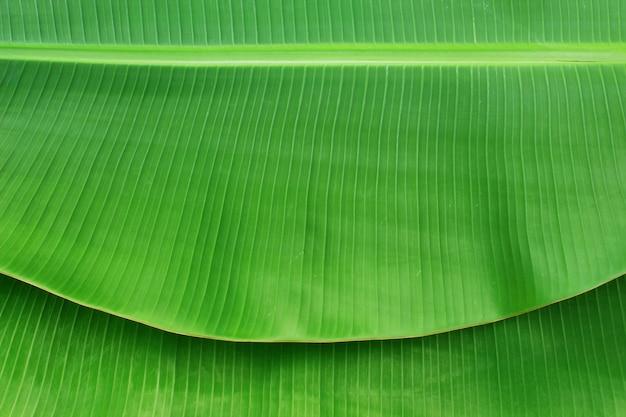 Крупным планом банановых листьев текстуры абстрактного фона Premium Фотографии