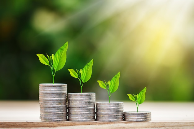 Дерево, растущее на монетах стека с солнечным лучом для экономии денег концепции Premium Фотографии