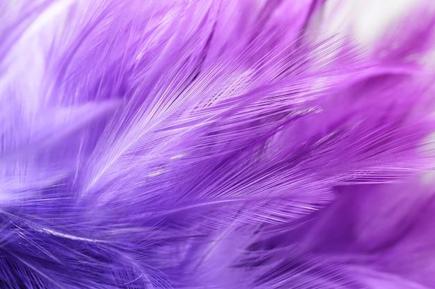 Фиолетовые куриные перья в мягком и размытом стиле для фона Premium Фотографии