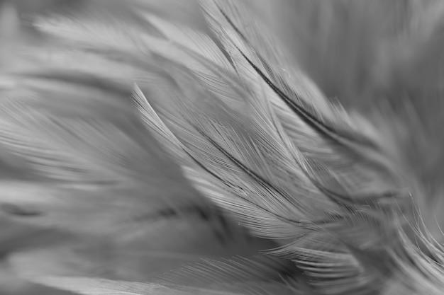 カラフルな鳥や鶏の羽の柔らかさとぼかしスタイルの背景 Premium写真