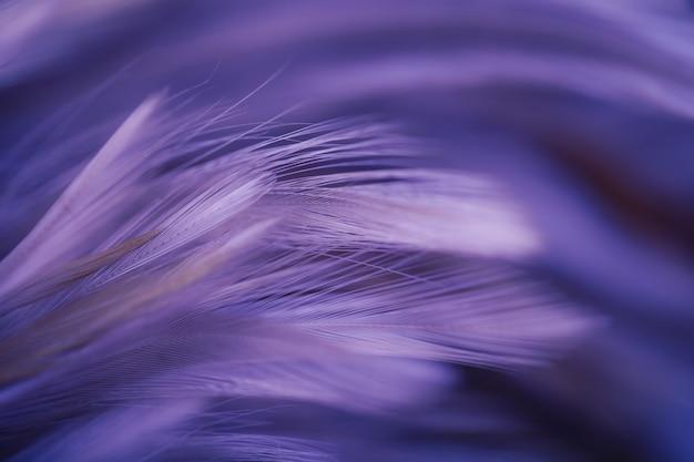 Конспект текстуры пера цыплят для предпосылки, мягкого фокуса и стиля нерезкости Premium Фотографии