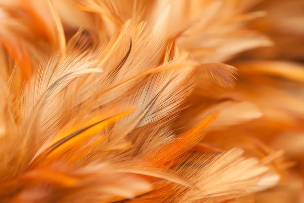 Красочные птичьи и куриные перья в мягком и размытом стиле для фона Premium Фотографии