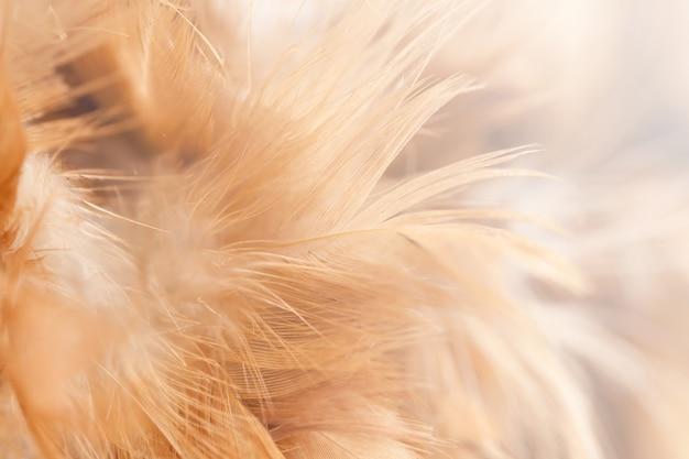 Птичьи и куриные перья в мягком и размытом стиле для фона Premium Фотографии