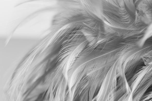 Лучистые куриные перья в мягком и размытом стиле для фона, черно-белые Premium Фотографии