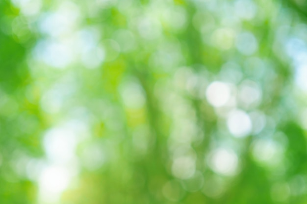 自然、柔らかい色の木からフォーカスの背景から緑のボケ Premium写真