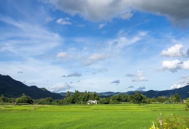 自然風景の雲と青い空とフェッシュグリーンライスのフィールド Premium写真