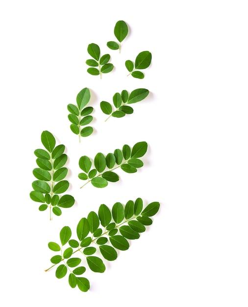 У листьев моринги есть лечебные свойства. вид сверху Premium Фотографии