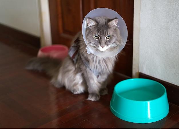 舐めるのを防ぐためにコーン襟を着た若い家庭のメインキャーン猫の肖像 Premium写真