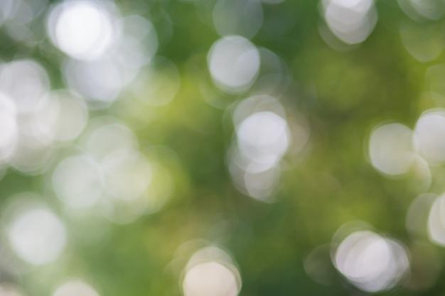ボケライトとぼやけた緑の葉 Premium写真