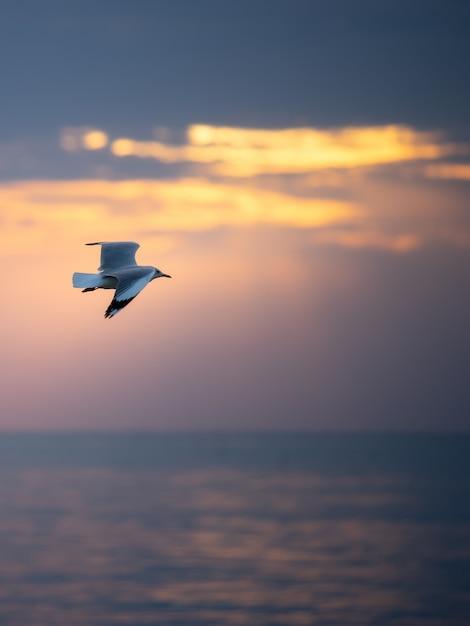 海の上を空を飛んでいるカモメ。 Premium写真