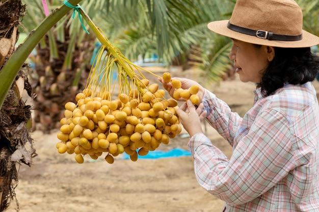 ナツメヤシのプランテーションの世話をする庭師のクローズアップ Premium写真