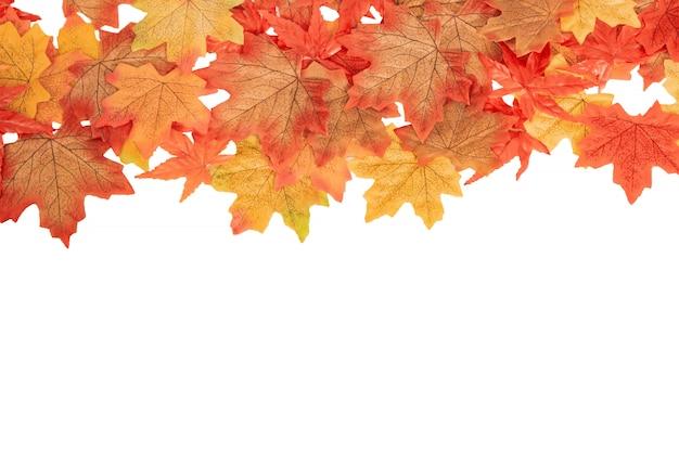 白の分離、秋のコンセプトにトップビューカラフルなカエデ紅葉 Premium写真