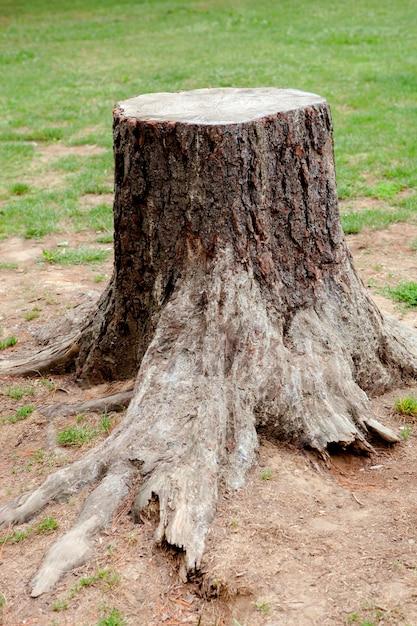 根の大きい古い木 Premium写真