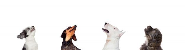 犬をカメラ目線 Premium写真
