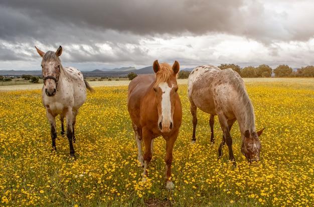 Три лошади в солнечный день Premium Фотографии