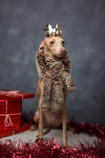 面白い犬は、ウィザードの王様として服を着た。クリスマス Premium写真