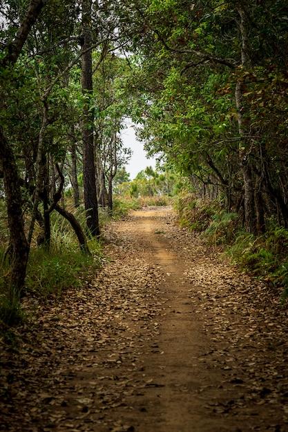 Туннельная тропа на фоне природы мистического леса Premium Фотографии