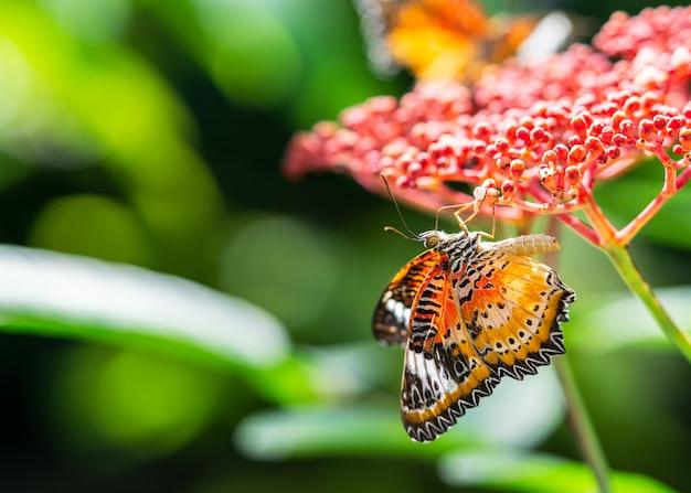 Разноцветные бабочки пьют нектар на красных цветах Premium Фотографии