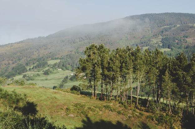 山と木の風景。 Premium写真