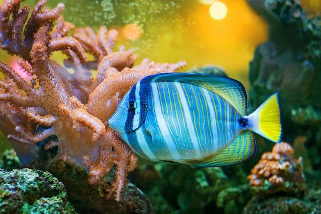 Рыба Premium Фотографии