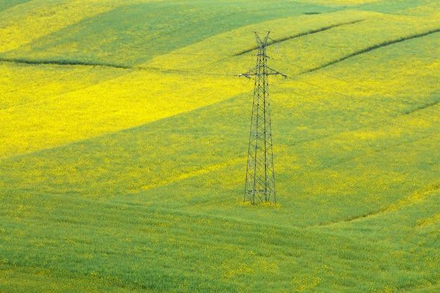 マスタードの花の分野で高電圧パイロン。 Premium写真