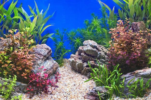 ナチュラルミラーキャビネットの水中風景装飾。 Premium写真