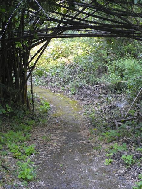 竹の森 Premium写真
