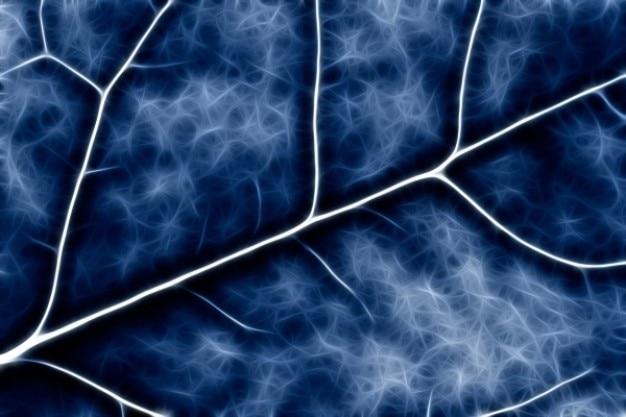 Абстрактного крестоцветных макро синие Бесплатные Фотографии