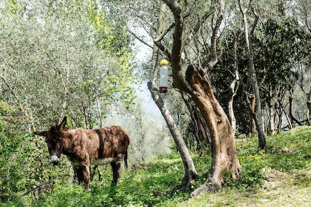 田舎の牧歌的な背景のロバ Premium写真