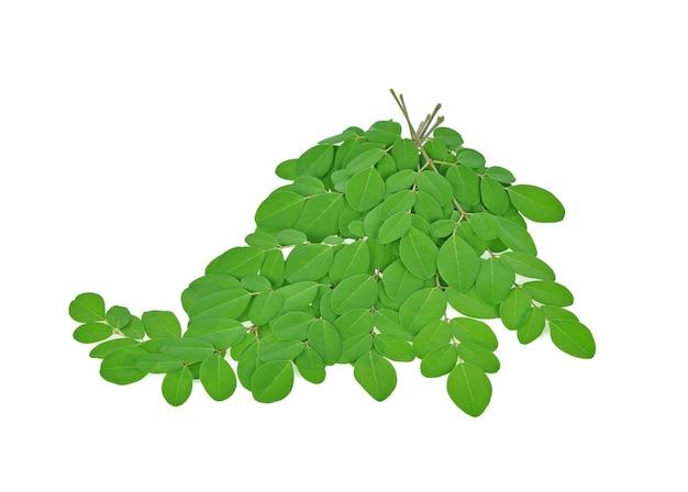 Отделение зеленых листьев моринга, тропические травы, изолированных на белом фоне Premium Фотографии