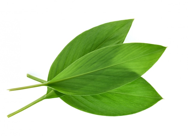 Изолированные листья куркумы Premium Фотографии