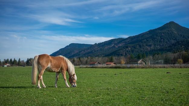 グリーンフィールドの馬 Premium写真