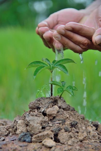植物苗。発芽時に成長する若い赤ちゃん植物を育て、水を与える手 Premium写真