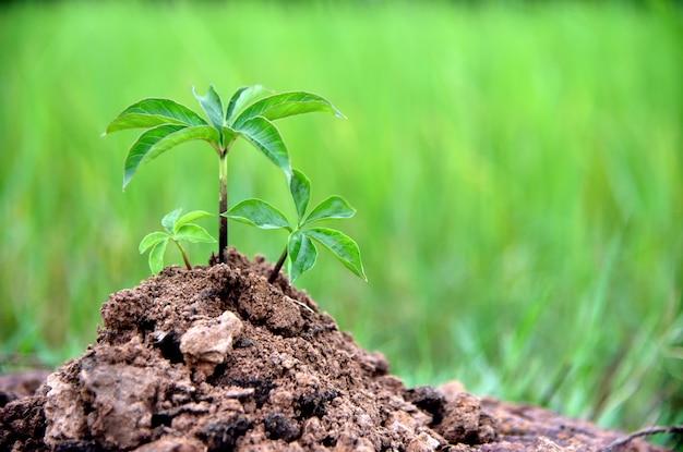 緑の自然の背景、地球環境のエコロジーの概念の土壌の赤ちゃん植物。 Premium写真