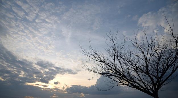 日没の死の木 Premium写真