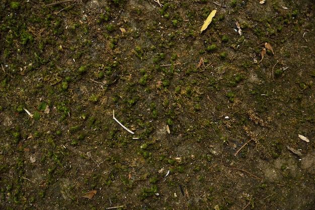 自然の質感と背景の石の上に乾燥苔 Premium写真