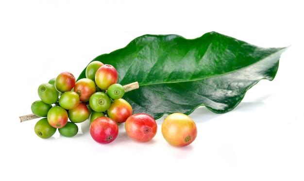 白で隔離される新鮮なコーヒー豆 Premium写真