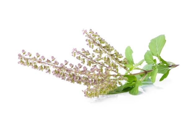 白い背景にバジルの花 Premium写真