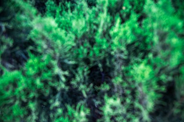 抽象的な自然の背景。 Premium写真