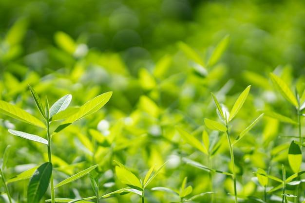 緑の木の自然の背景。 Premium写真