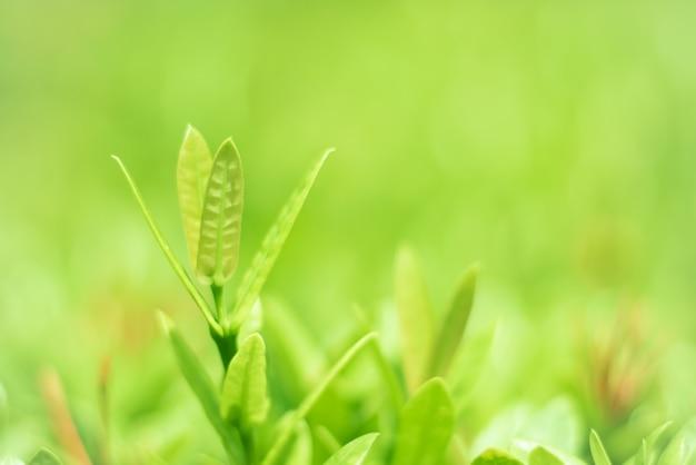 緑の葉、美しい自然が育っています。 Premium写真