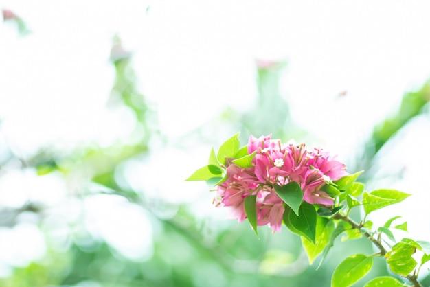 天然の花 Premium写真
