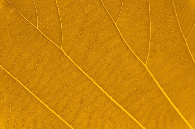 テクスチャ背景の黄色の葉 Premium写真