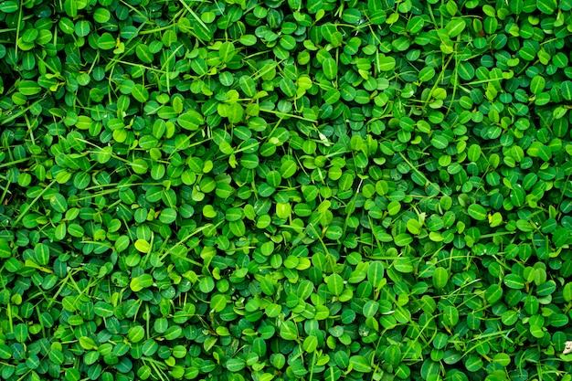 緑の葉のテクスチャ背景。 Premium写真