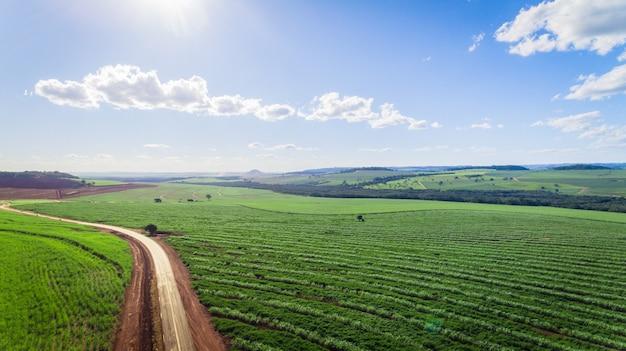 サトウキビプランテーションフィールド空撮日光。農業産業 Premium写真