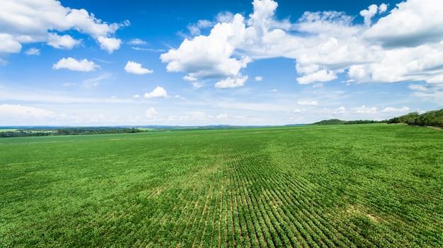 大豆または豆のプランテーションと農場の空撮。 Premium写真